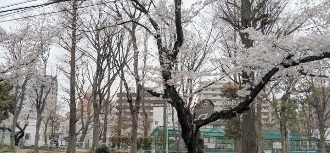 レジオス動坂_6