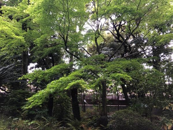ニュー赤坂コーポラス_4